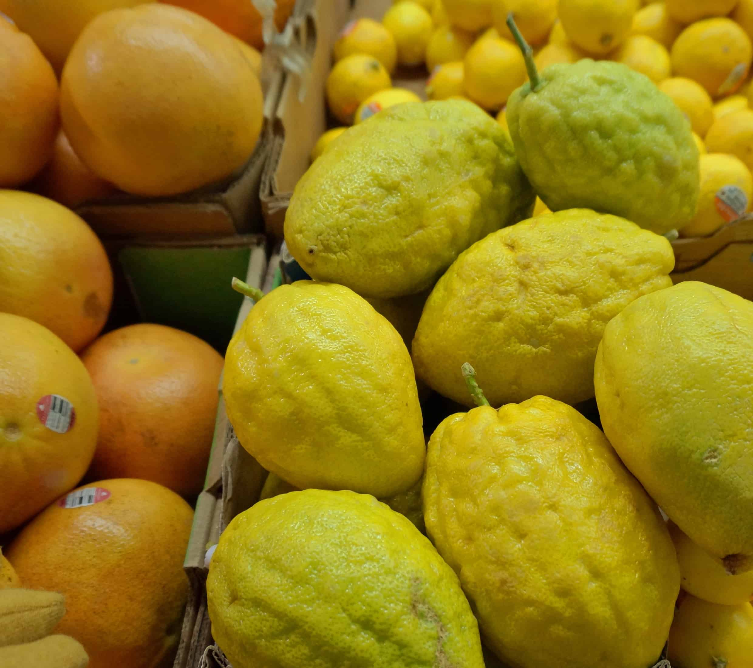 © 2015 Shelley S. Cramm Citrons, also known as Etrog, among the citrus for sale at Central Market in Southlake, Texas
