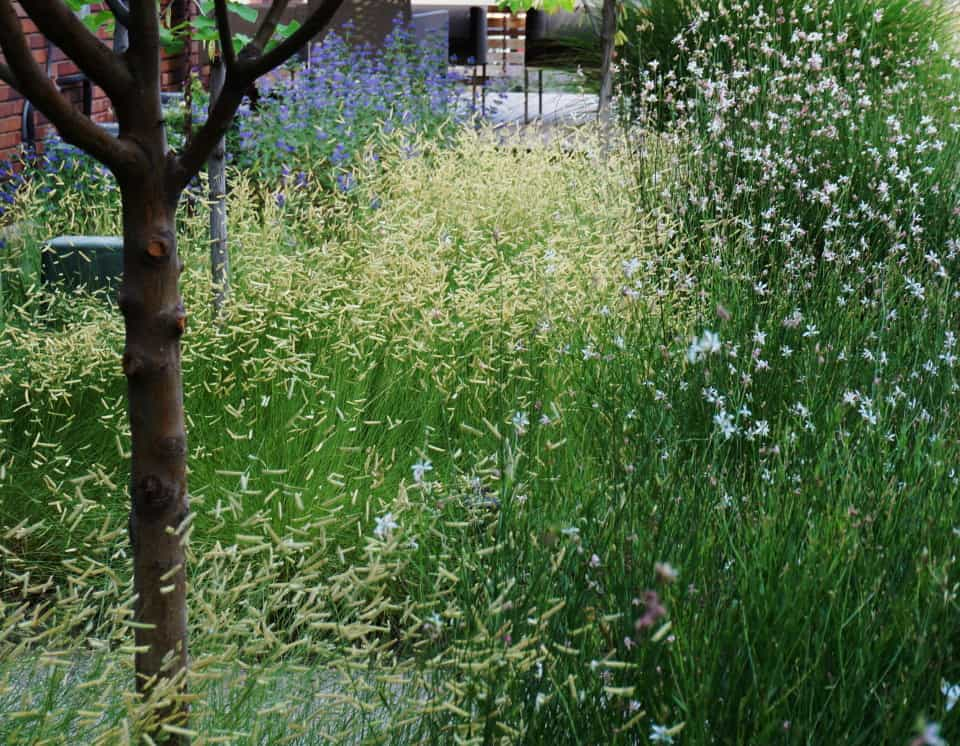 ornamental grasses and wildflowers planted together