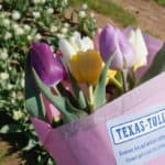 cut your own bouquet at Texas Tulips