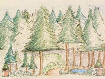 Isaiahs Evergreens sketch Prophets & Leaders Bible Garden Design