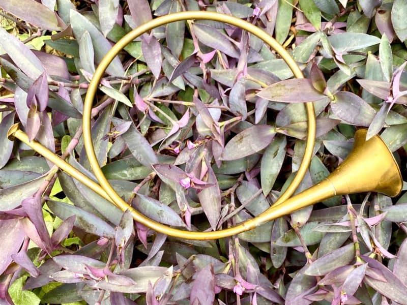 fall feast begin with the Feast of Trumpets - like this decorative brass horn in a garden bed of wandering Jew