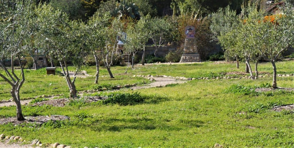 Station of the Cross surrounded by an olive grove lead visitors to hope in Christ
